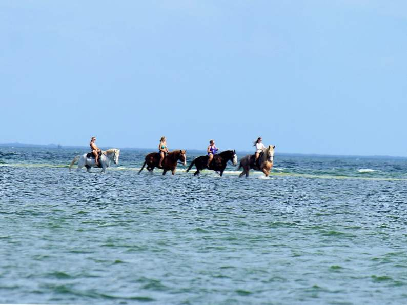 you can go swimming with horses in pinellas park fl 2