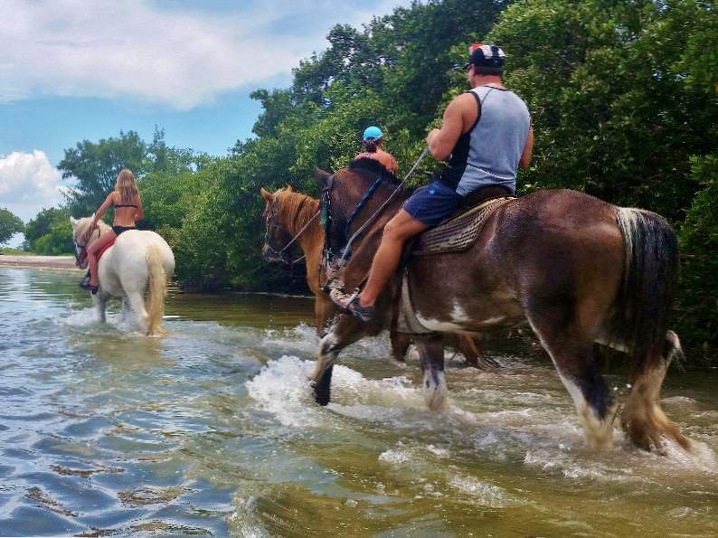 you can go swimming with horses in pinellas park fl 3