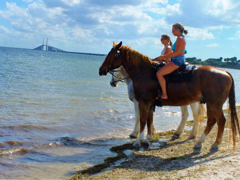 you can go swimming with horses in pinellas park fl 4