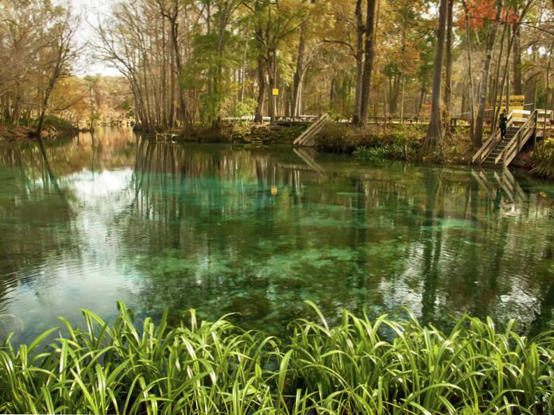 10 springs in florida for the nature lover to visit 6