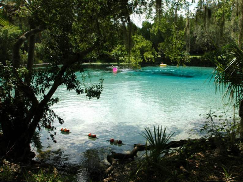 10 springs in florida for the nature lover to visit 8