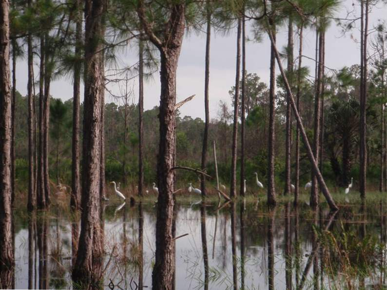 10 totally underrated hiking trails in florida 3