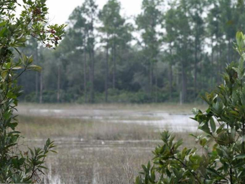 10 totally underrated hiking trails in florida 4
