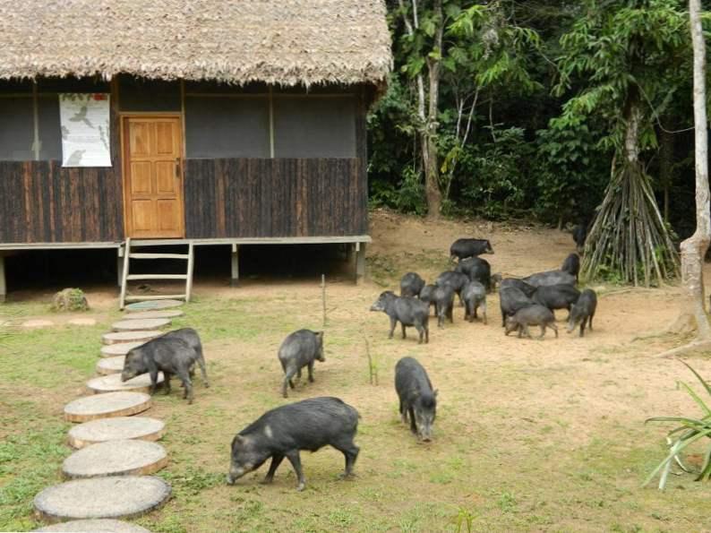 top eco resorts and nature retreats in bolivia